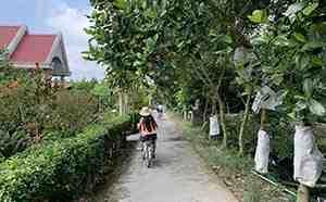Cycling mekong delta tour